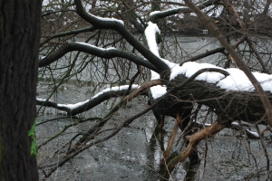 Baum am Donaukanal