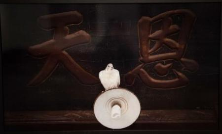 Zhang Xiaodi Feng ru song - diyi ge ruzhe 2013
