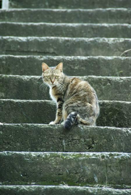 Katze in Taiwan 苗栗竹南山佳里